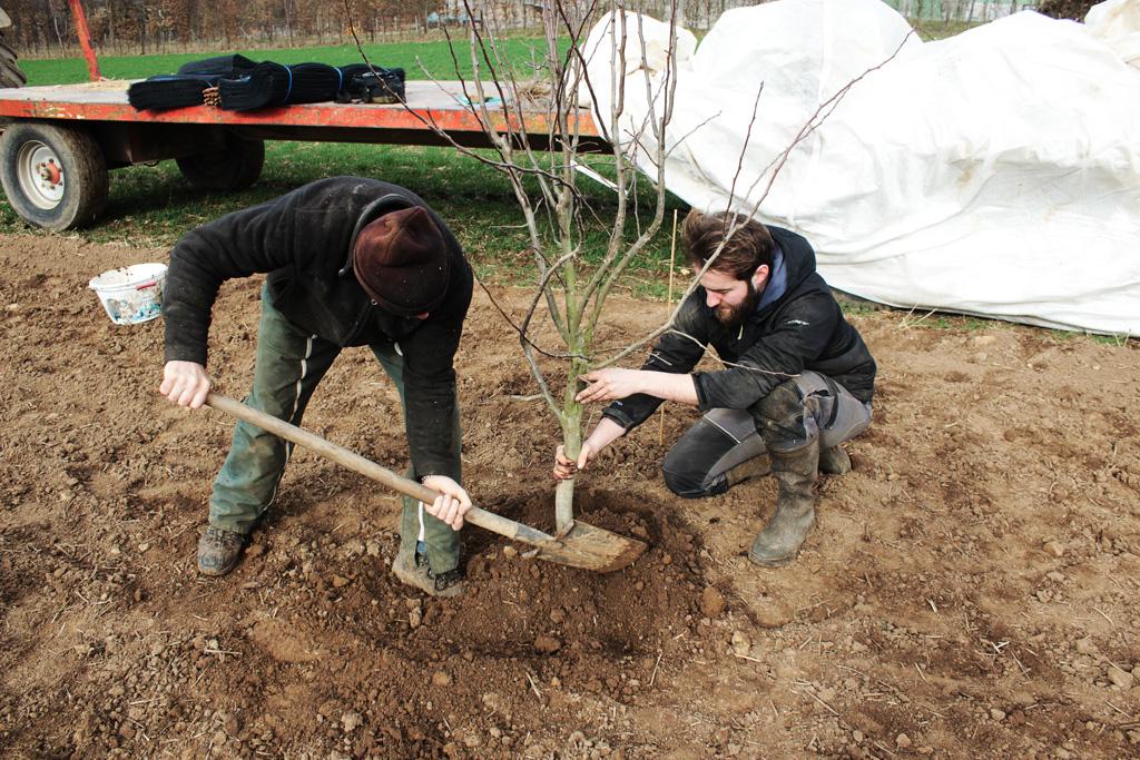 agroforesterie-a-la-ferme-au-fil-de-l'ante-exemple plantation