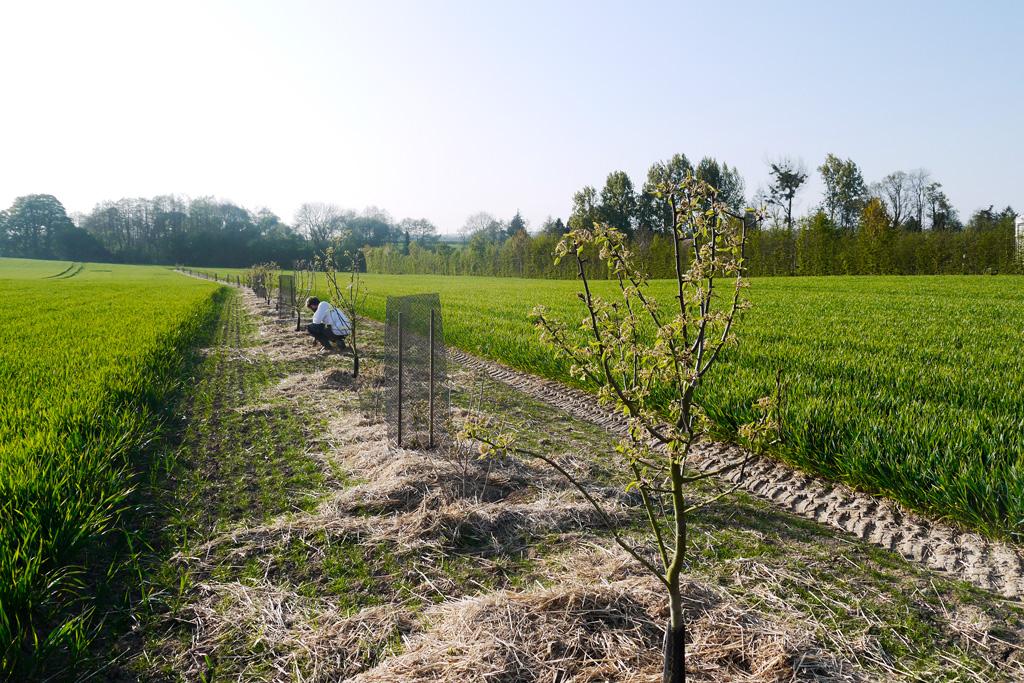 agroforesterie a la ferme au fil de l'ante